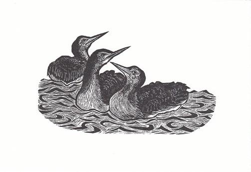 Birds of Calm
