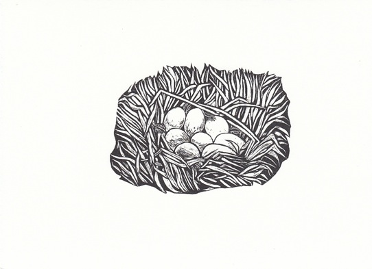 Line Drawing Nest : Royalty free drawing of the baby birds nest clip art vector